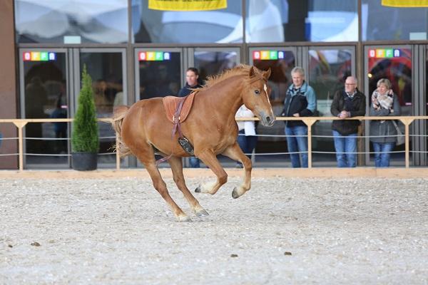 www.af-fotografie.ch